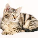 猫を飼うと月々いくらかかる?猫歴4年のウチの支出は月4千円くらいです